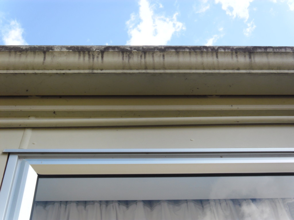 Gutter before clean down North Auckland